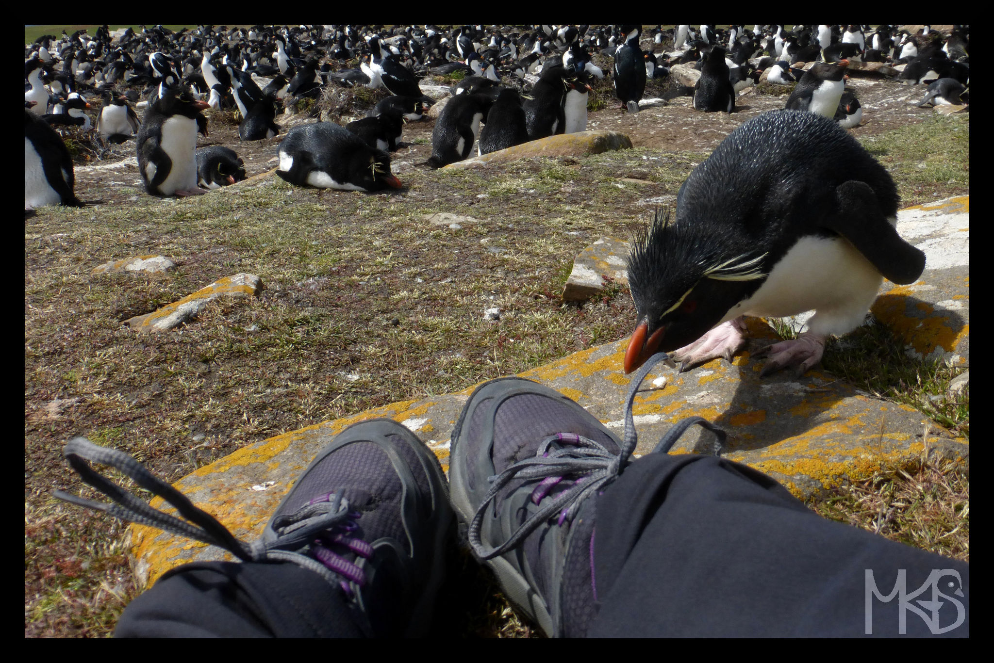 The rockhopper and my shoes