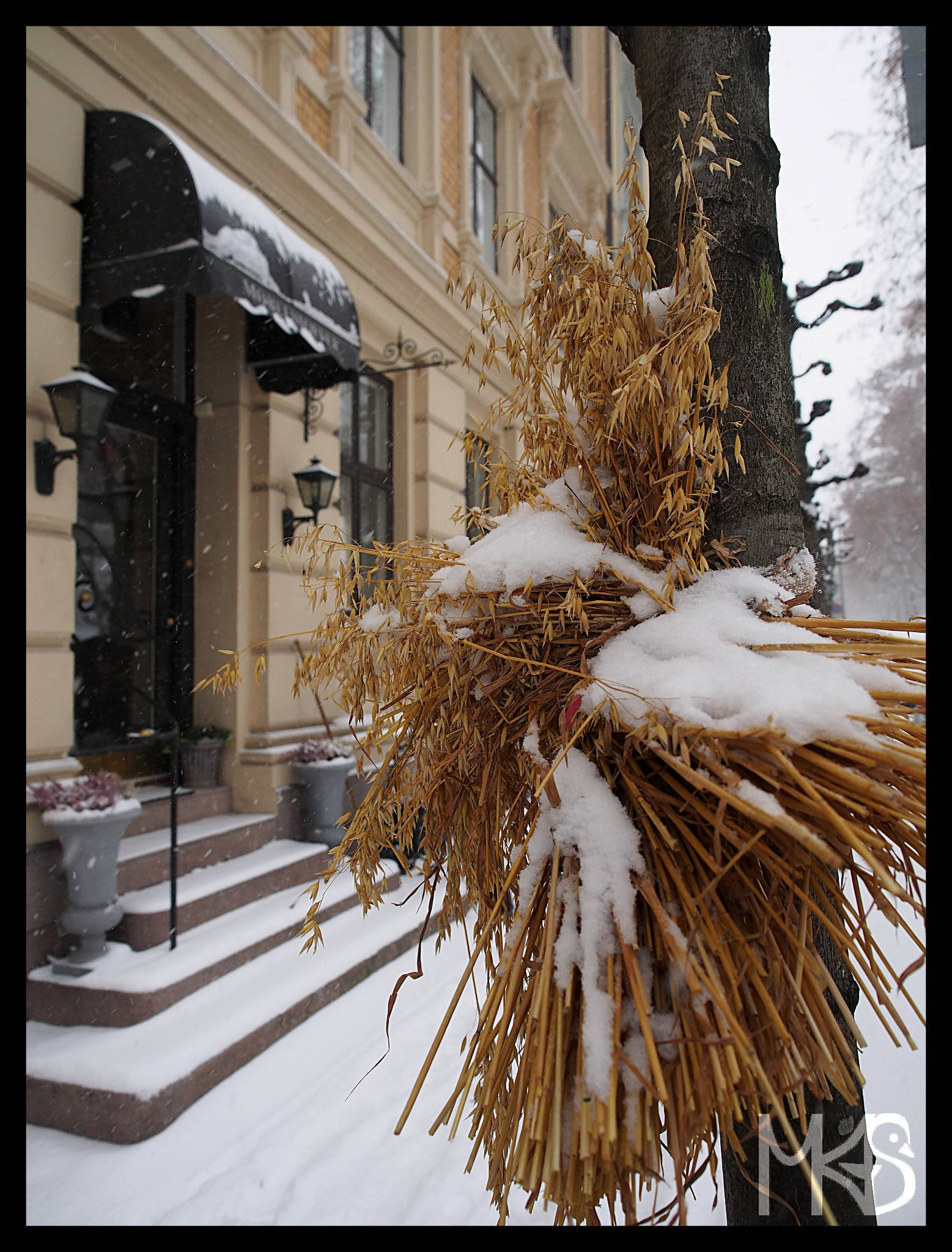 Bundles of grain for birds, Oslo