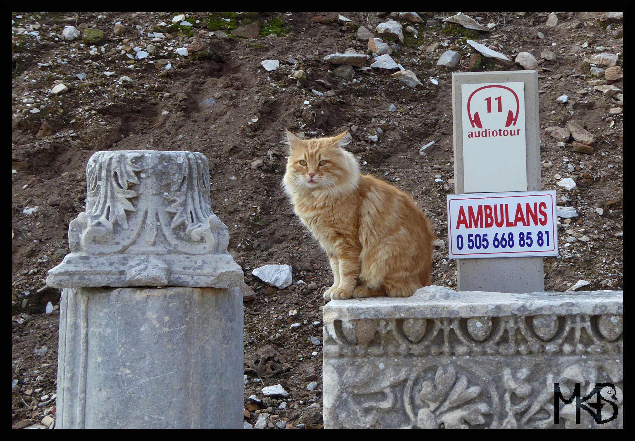 Cat in Ephesus, Turkey