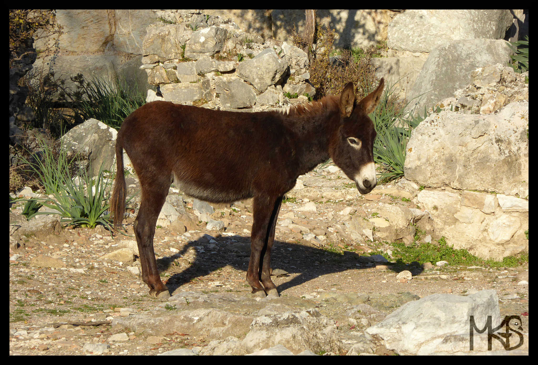 Donkey in Kaunos, Turkey