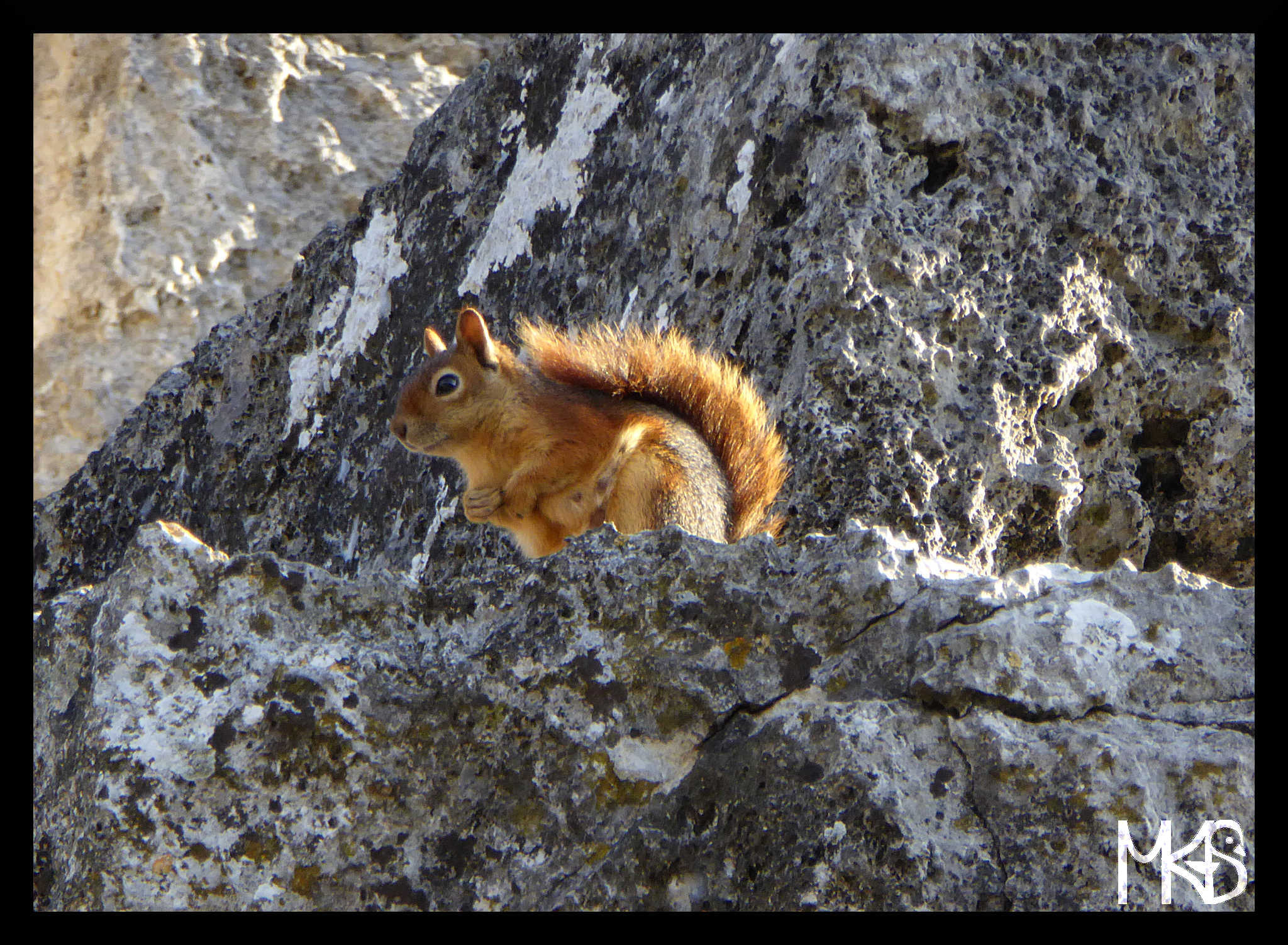 Squirrel in Kaunos, Turkey